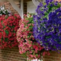 Hands-on Review: Eco-friendly Hanging Basket
